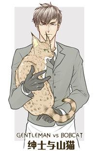 Gentleman VS Bobcat